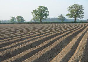 EIA & Soils